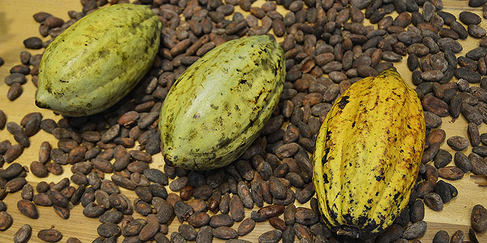 Sweet distraction, Cocoa shortage confusion remains