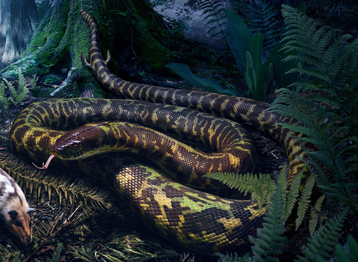 The original ancestor of snakes was a nocturnal predator that had tiny hindlimbs with ankles and toes