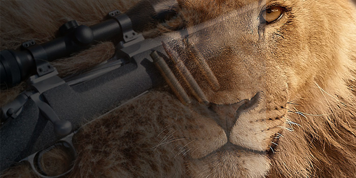 The life and death of Cecil the Lion