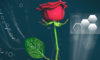 E-plants: Scientists have fused electronics and roses